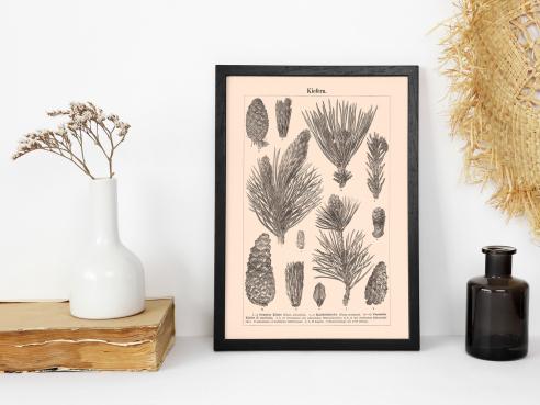 Vintage Print - Pine