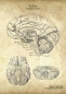 Preview: The Brain - Patent-Style - Anatomie Poster