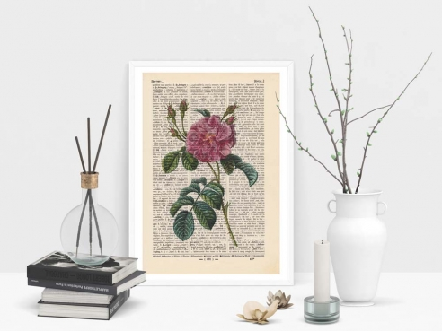 China Rose - Print on antique book page
