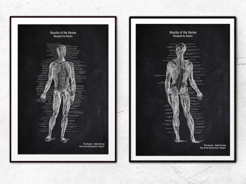 2er Set The Muscles - Patent-Style - Anatomie Poster