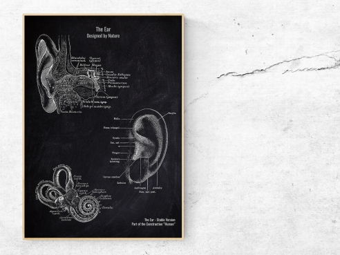 The Ear - Patent-Style - Anatomie Poster