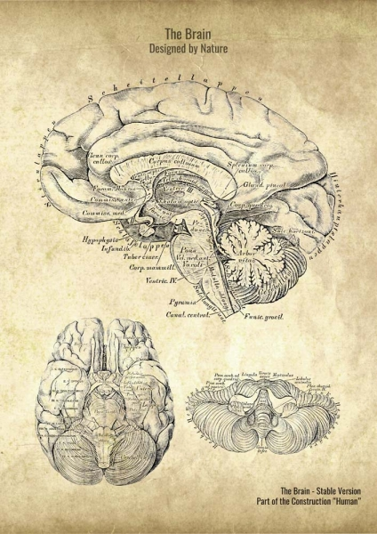 The Brain - Patent-Style - Anatomie Poster