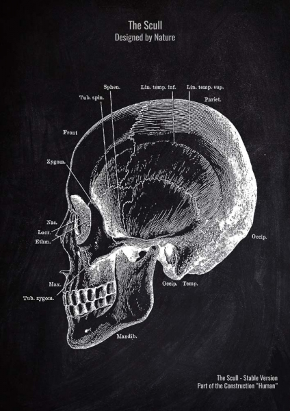 The Scull